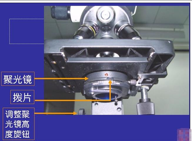 显微镜的使用方法